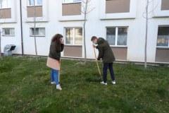 Zasaditev-drevesa-1