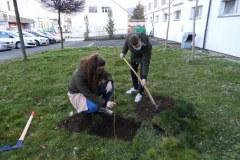 Zasaditev-drevesa-2