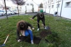 Zasaditev-drevesa-3