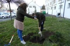 Zasaditev-drevesa-4