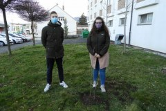 Zasaditev-drevesa-5